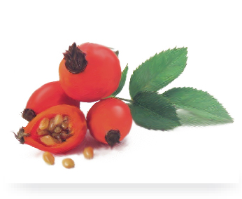 La Rosa Mosqueta / The Rose Hip